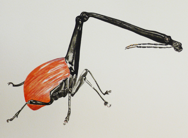 Giraffe weevil II